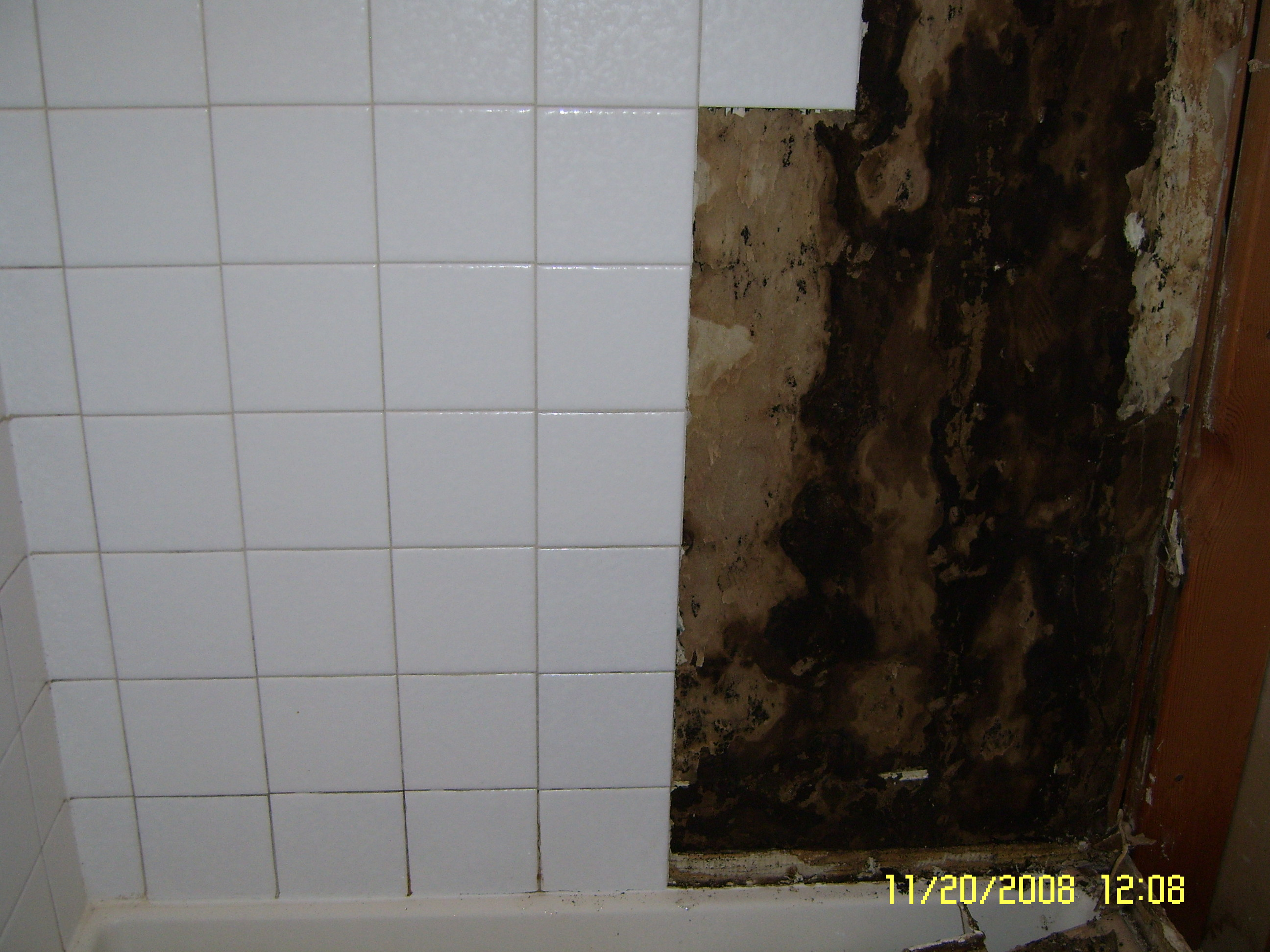 Bathroom mildew removal 28 images removing mold spots for How to remove molds in bathroom